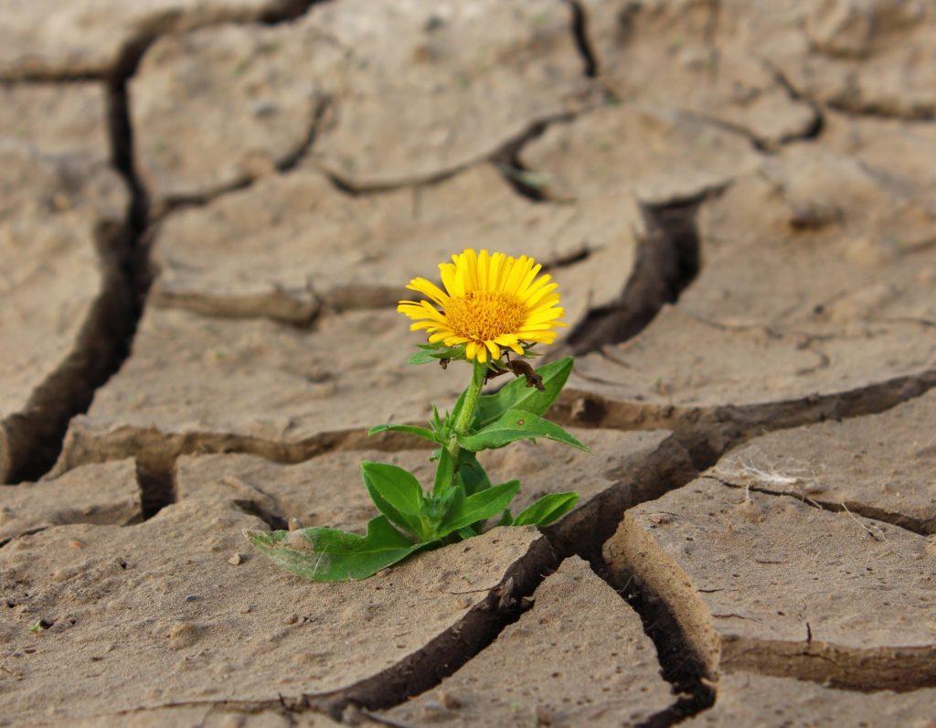 flor-en-el-desierto (como mejorar la motivación de tus alumnos)